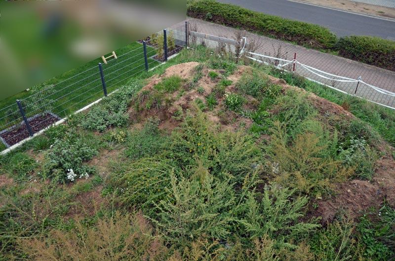 Garten vorm Planieren (Ostseite)