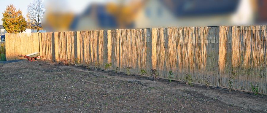 Zaun mit Schilfrohrmatte und eingepflanzten Clematis