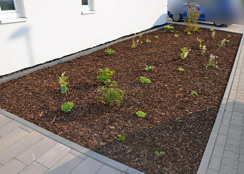 Vorgarten Pflanzen Vervollständigt Und Gemulcht Heim Am Main